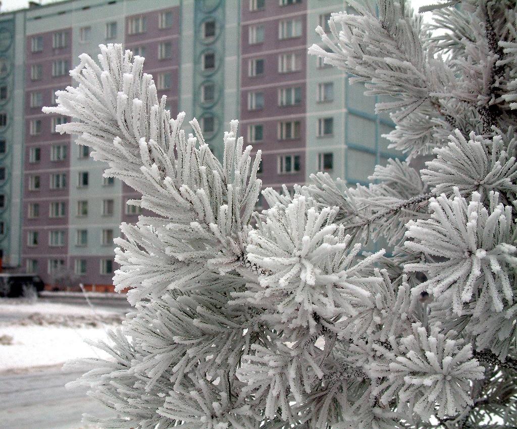 Трехдневная рабочая неделя обещает быть морозной