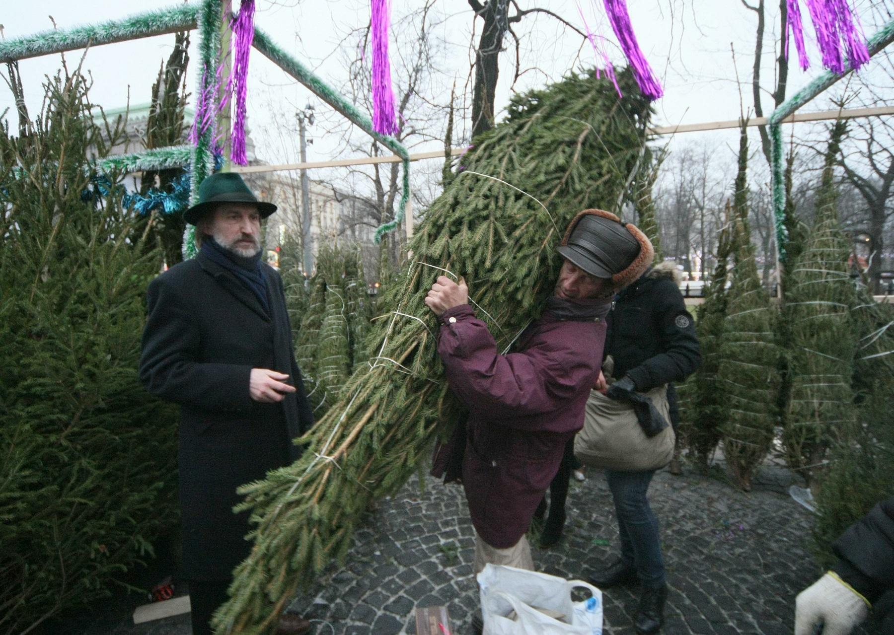ВВолгограде новогодним елкам отыскали необычное применение