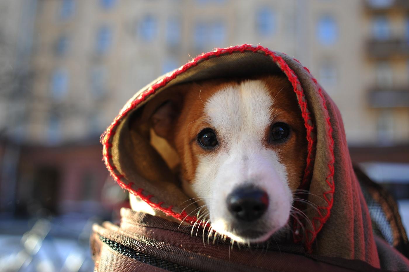 Ученые призвали готовиться ксамой холодной зиме запоследнее столетие