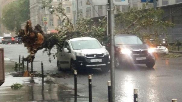 СКподтвердил смерть 8-ми человек в итоге ураганного ветра вМосковском регионе