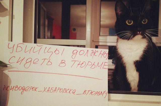 Первое «живодерское» слушание вХабаровске пройдет 13марта