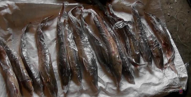 Волгоградская милиция  задержала астраханского браконьера, специализировавшегося начерной икре