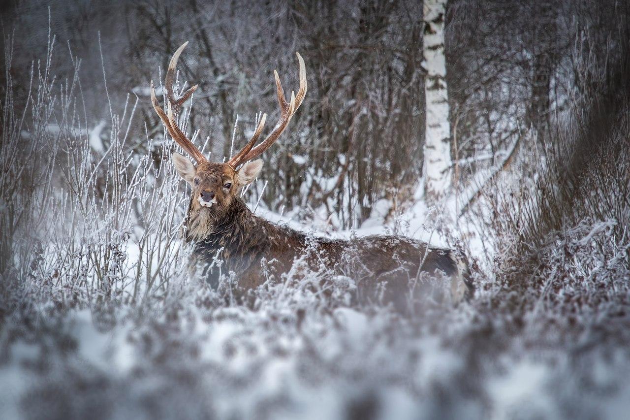 ВВолгоградской области возросла численность охотничьих ресурсов