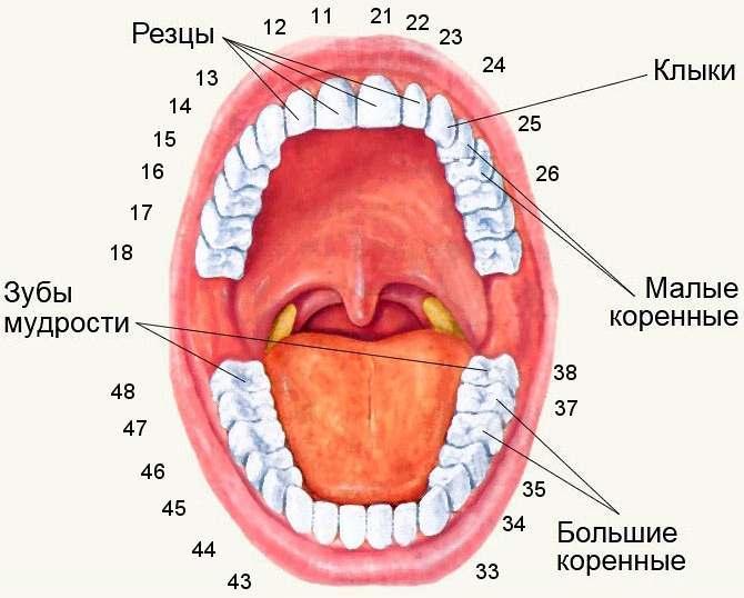 НаСтаврополье задержали 400кг контрафактных зубов изКитая
