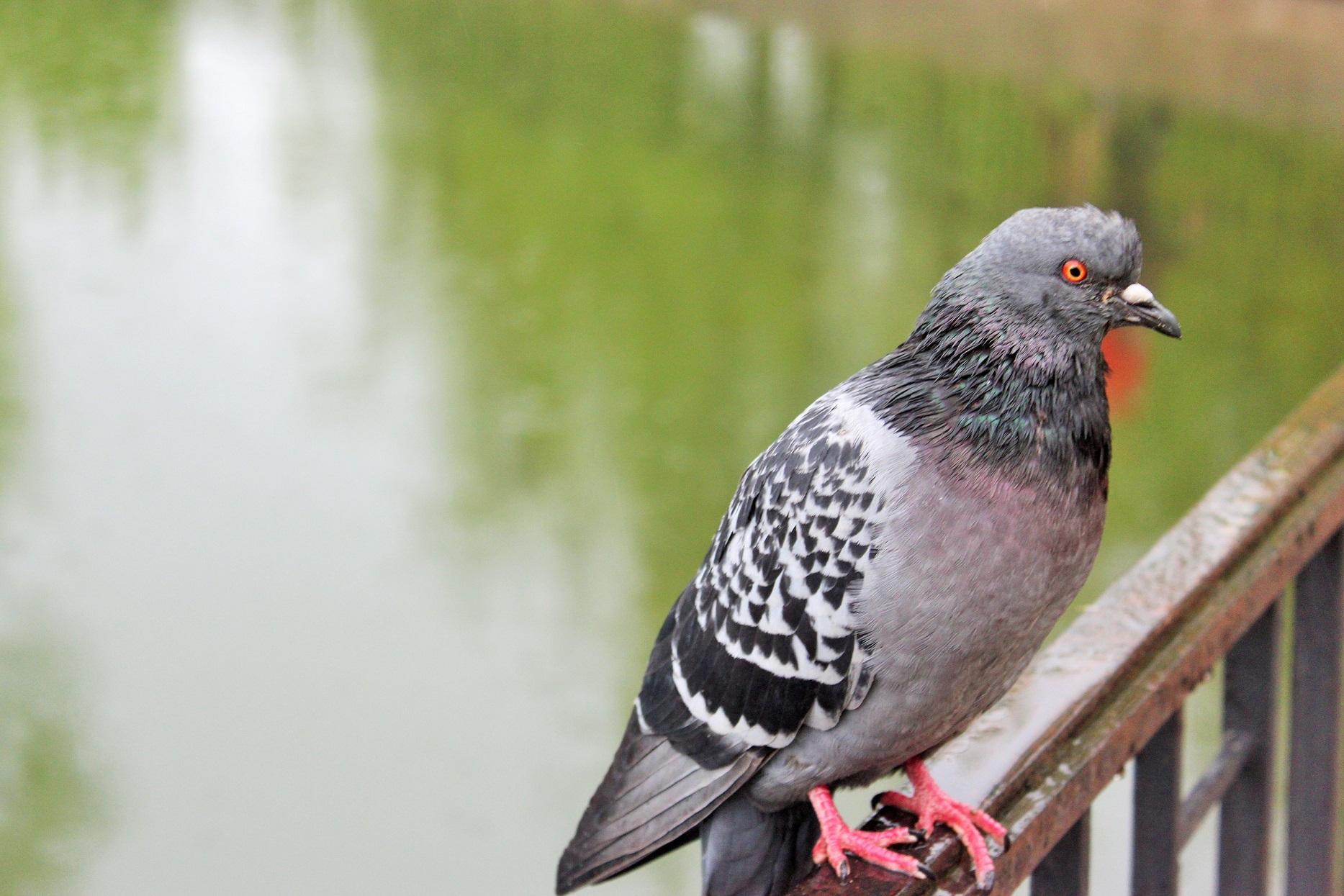 чиновники картинки голубей ворон воробьев есть много