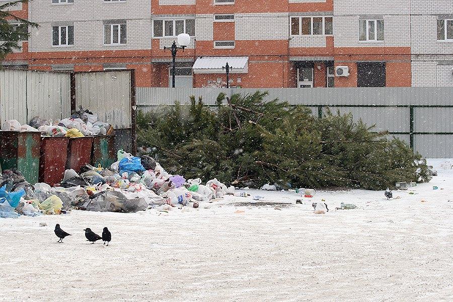 Волгоградец смог предложить землякам решение, куда деть новогодние ёлки