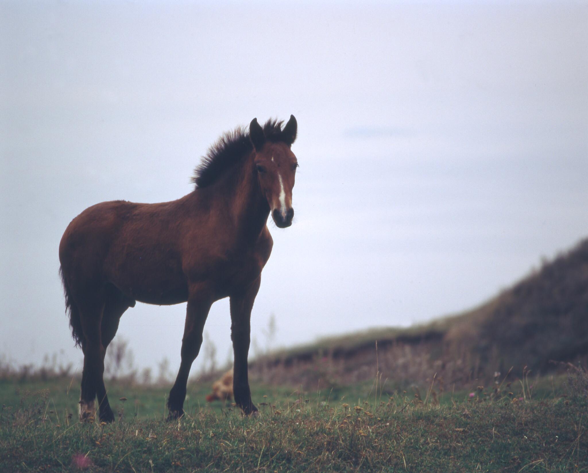 В Волгоградской области мужчина убил чужого коня