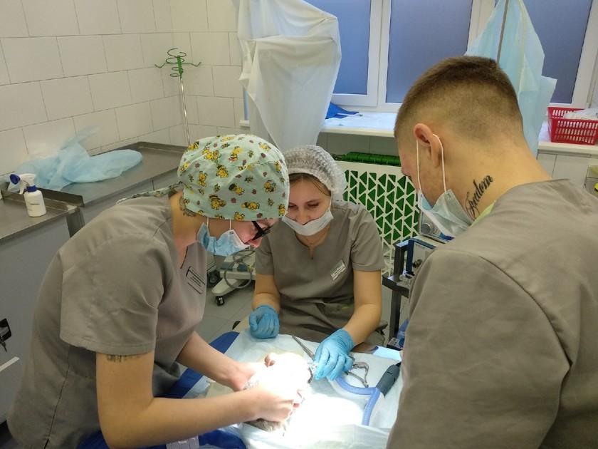 В Волгограде спасли шиншиллу после лечения в столичной клинике