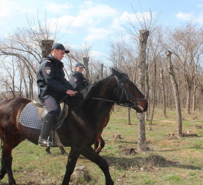 Улицы Волжского снова патрулирует конная полиция