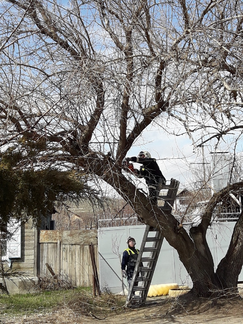 Вмешательство журналистов спасло жителей Кировского района от падающего на дорогу дерева
