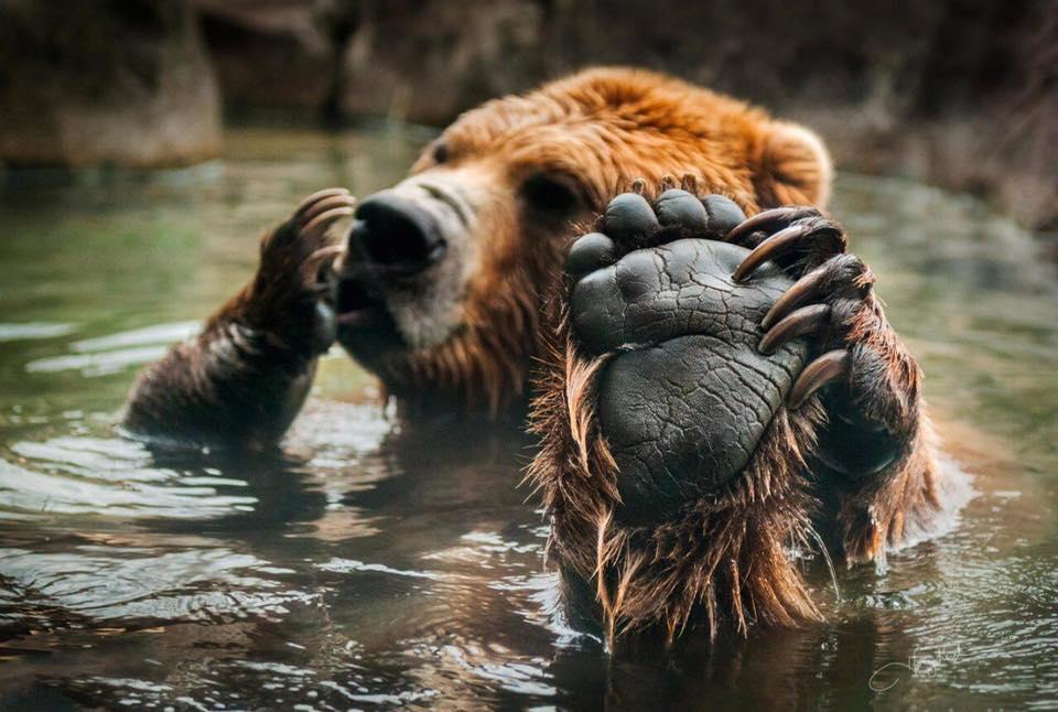 медведь архетип