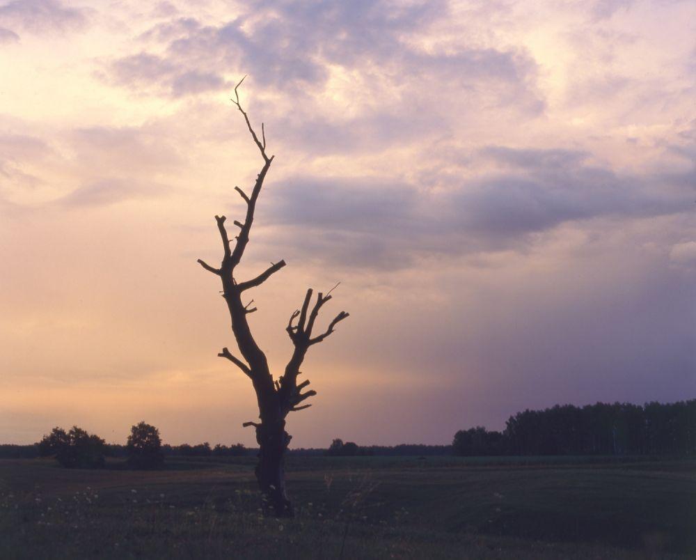 Волгоград ждет вырубка деревьев