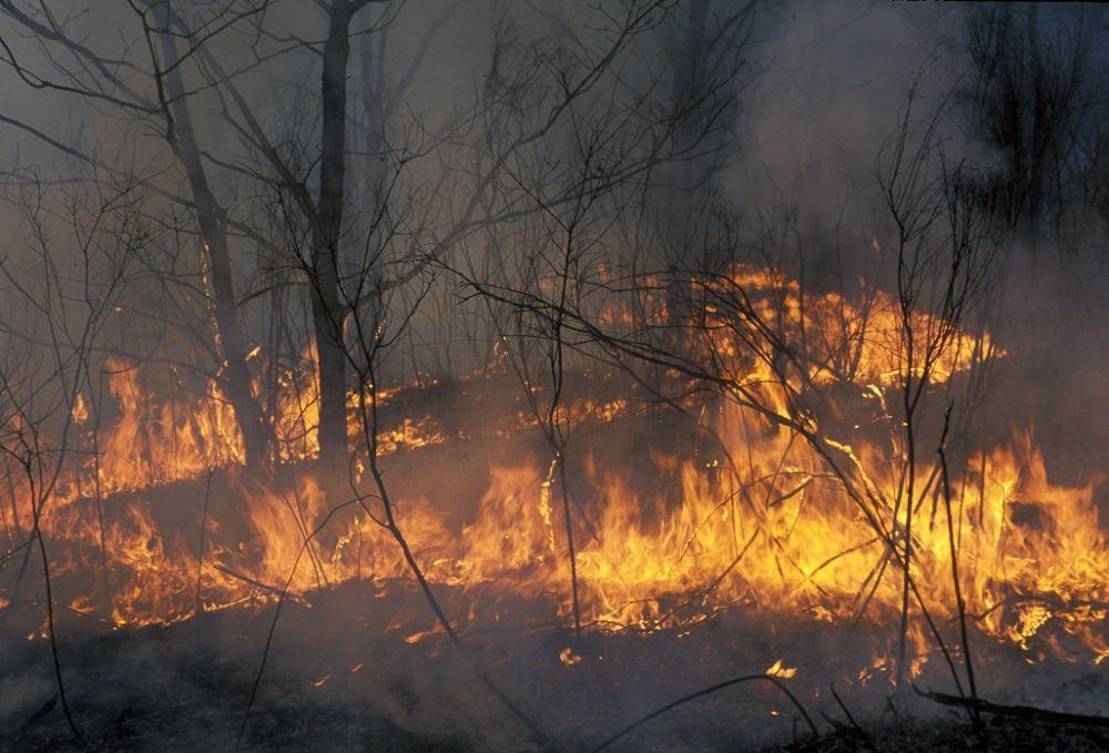 МЧС предупреждает о чрезвычайной пожароопасности