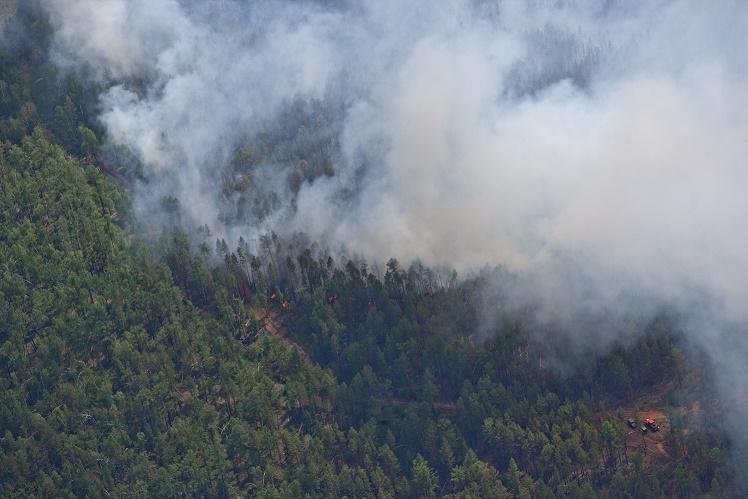 Названы виновные в лесных пожарах в Сибири и на Дальнем Востоке