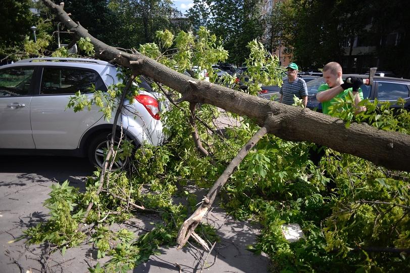 Ливни, град и сильный ветер идут на Волгоградскую область