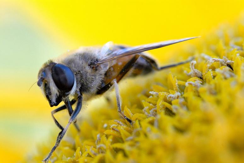 Минсельхоз РФ призвал не делать преждевременных выводов в связи со случаями гибели пчелосемей