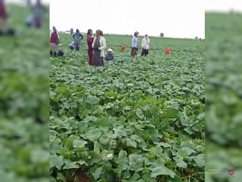 На ферме в Среднеахтубинском районе «накрыли» нелегальных мигрантов