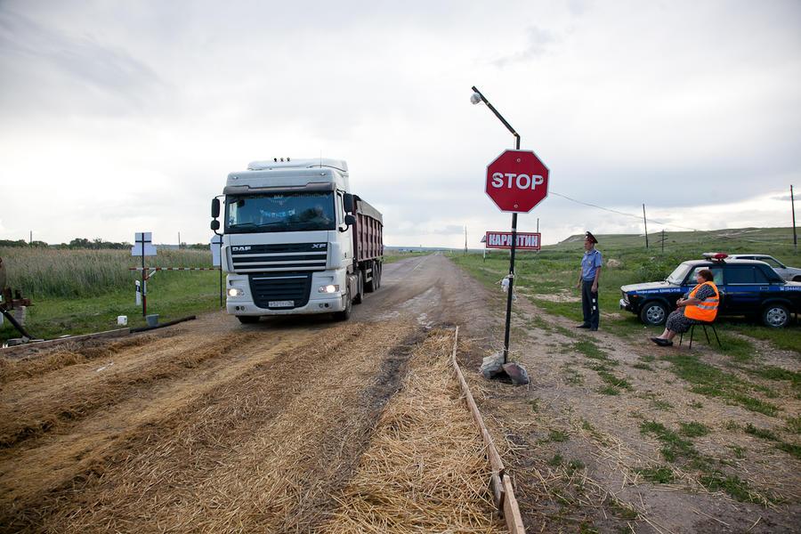 Давно не слышали: в Волгоградской области выявили очередной очаг африканской чумы свиней