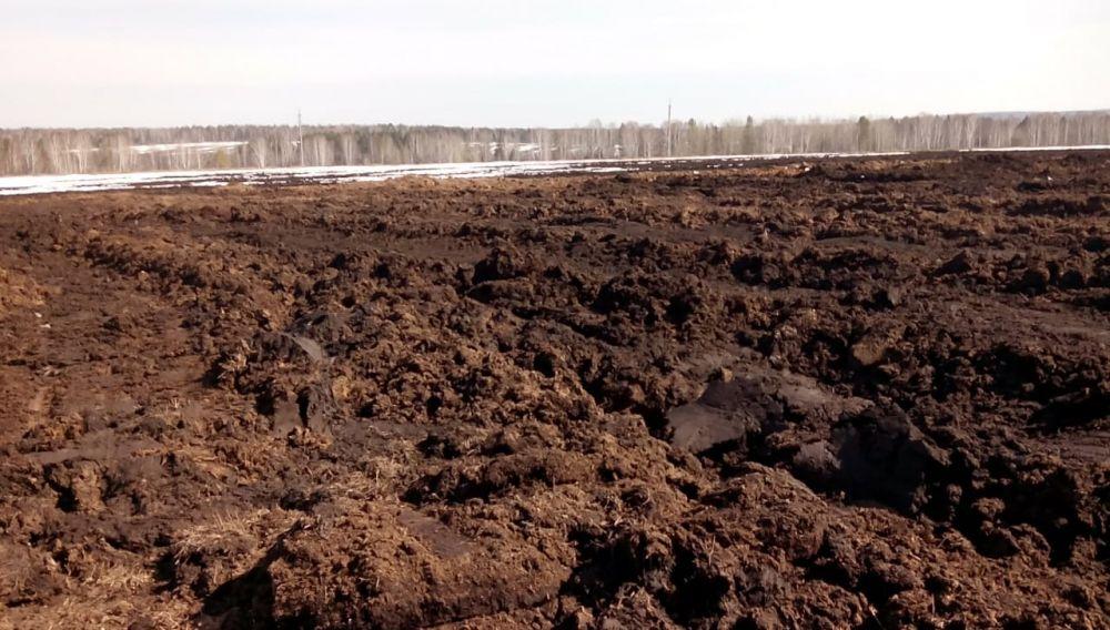 Мухи-копрофаги терроризируют жителей Свердловской области
