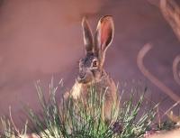 Охота на зайцев довела двоих охотников до суда