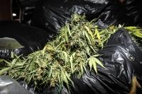 Житель Михайловки для собственного употребления запасся 5 килограммами марихуаны