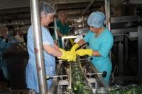 На юге Волгограда консервный завод  возобновил работу