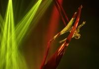 СКР проверяет смерть воздушного акробата из цирка Запашного