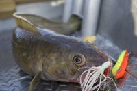 В России планируется изменение правил рыболовства