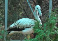 Найденного фламинго поселят в зоосаде волгоградского монастыря