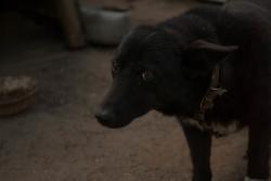 В Госдуме решили «узаконить» отношение россиян к животным