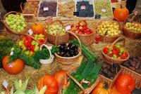 В Волгограде на вокзале открыли магазин с горчичным маслом и чипсами из фруктов