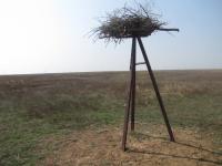 Экологи пытаются сохранить потомство птиц в Приэльтонье Волгоградской области