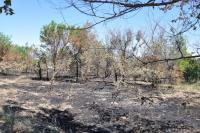 Волгоградские экологи: в Красноармейском районе погибают деревья